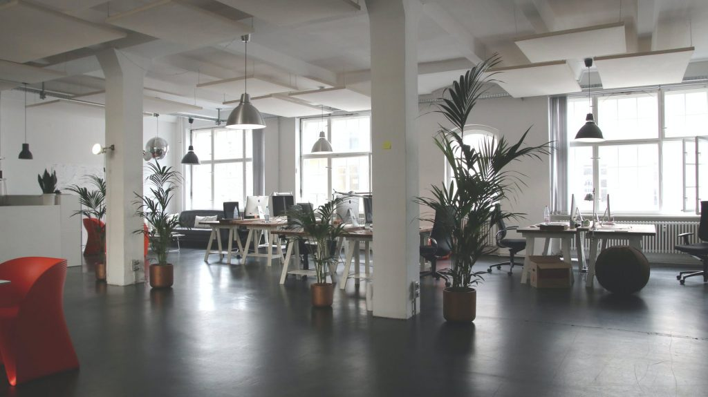 Green leafed plants in a clean and tidy office